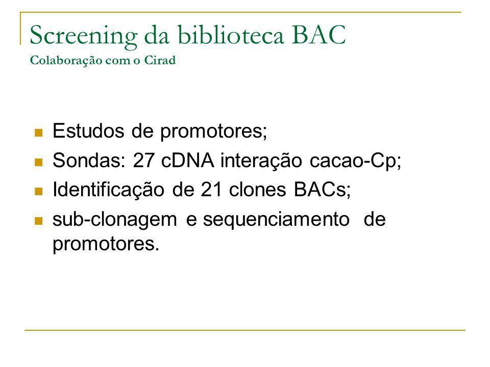 Screening da biblioteca BAC Colaboração com o Cirad
