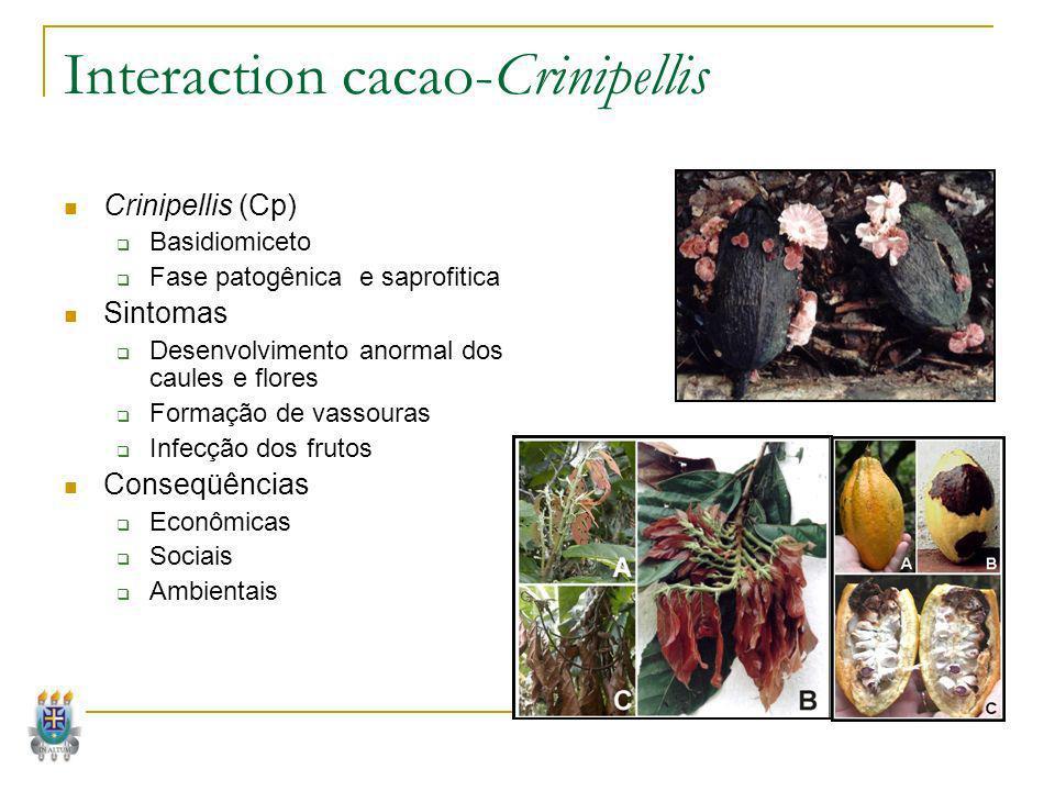 Interaction cacao-Crinipellis