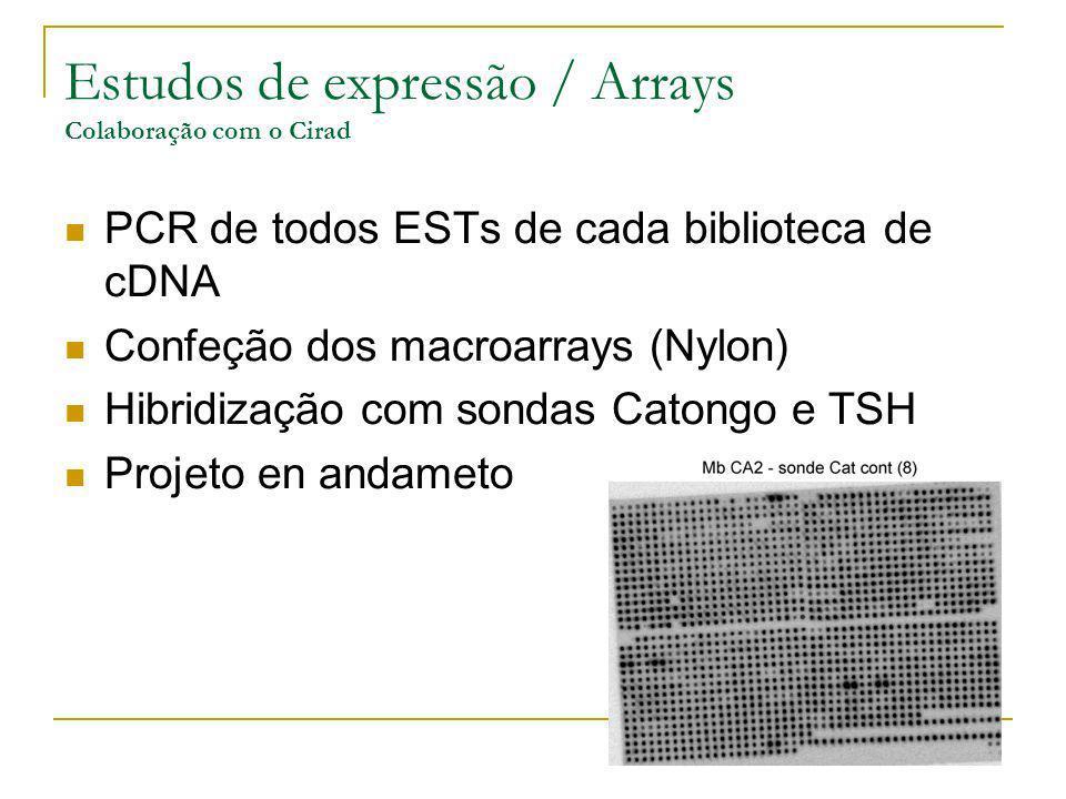 Estudos de expressão / Arrays Colaboração com o Cirad