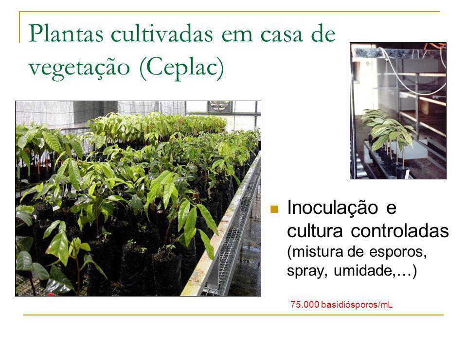 Plantas cultivadas em casa de vegetação (Ceplac)