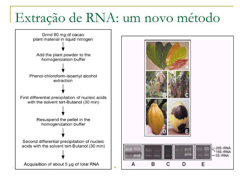 Extração de RNA: um novo método