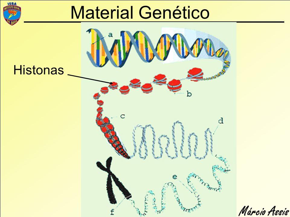 Material Genético Histonas