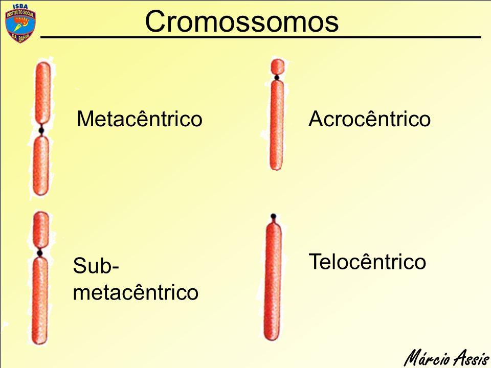 Cromossomos Metacêntrico Acrocêntrico Telocêntrico Sub-metacêntrico