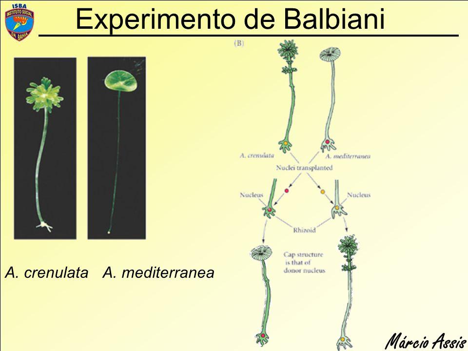 Experimento de Balbiani