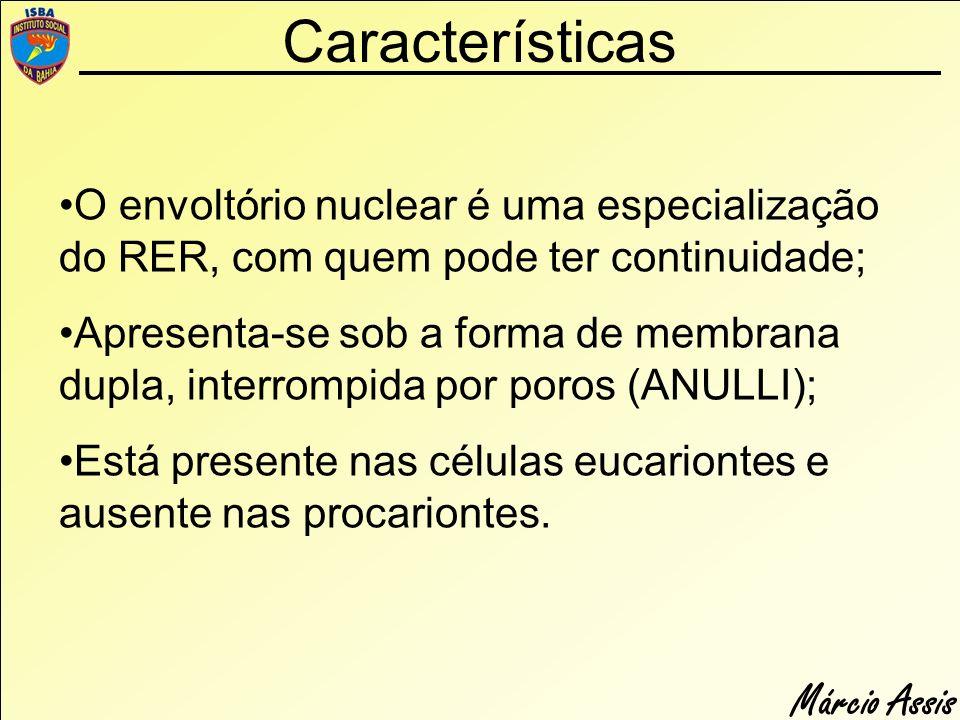 Características O envoltório nuclear é uma especialização do RER, com quem pode ter continuidade;