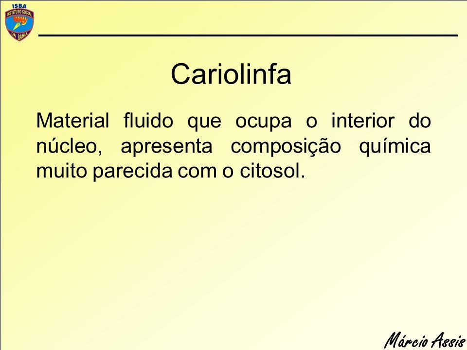 Cariolinfa Material fluido que ocupa o interior do núcleo, apresenta composição química muito parecida com o citosol.