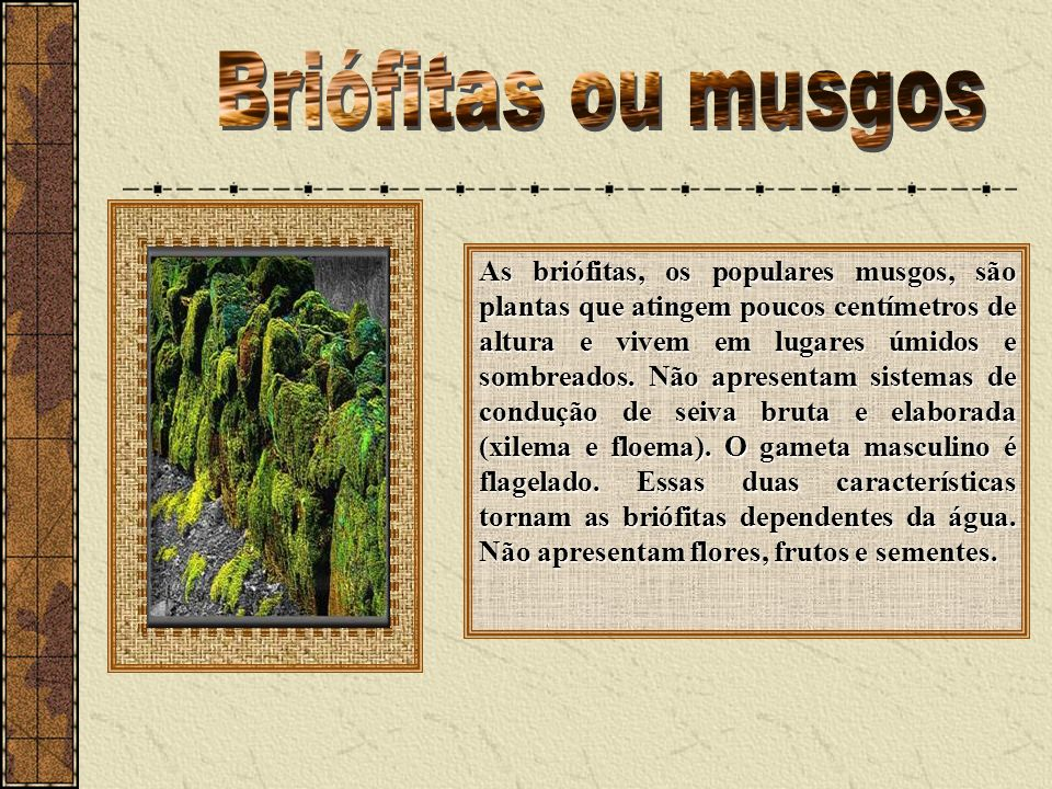 Briófitas ou musgos