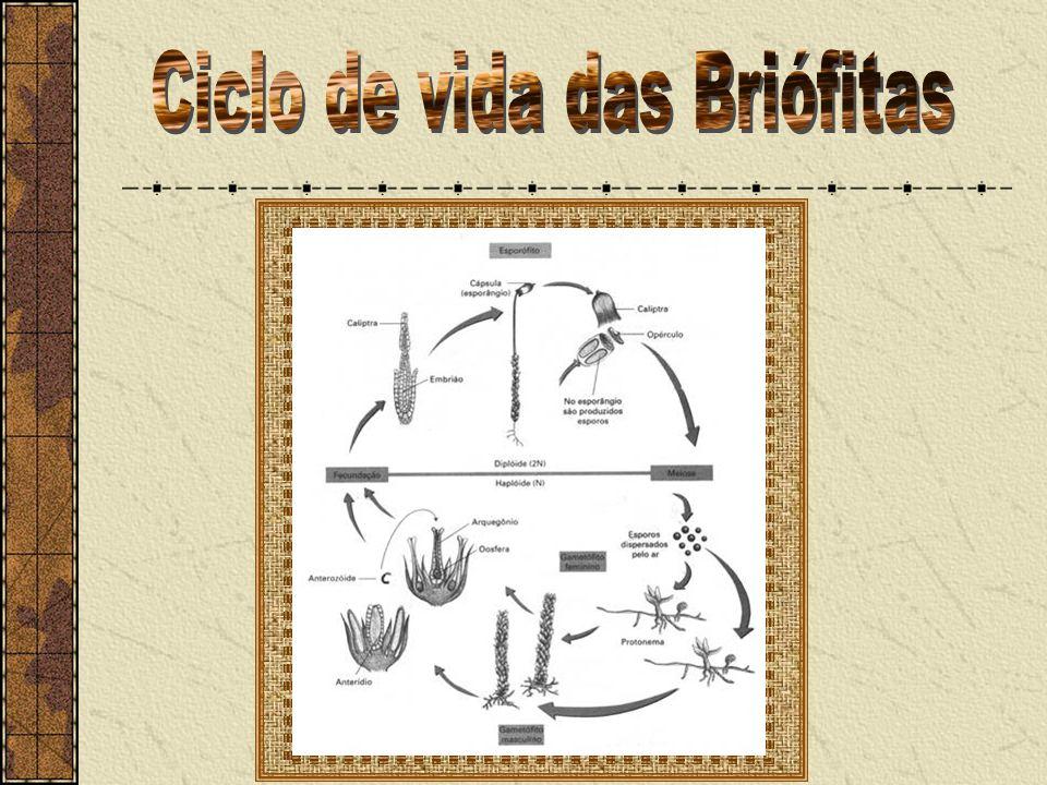 Ciclo de vida das Briófitas