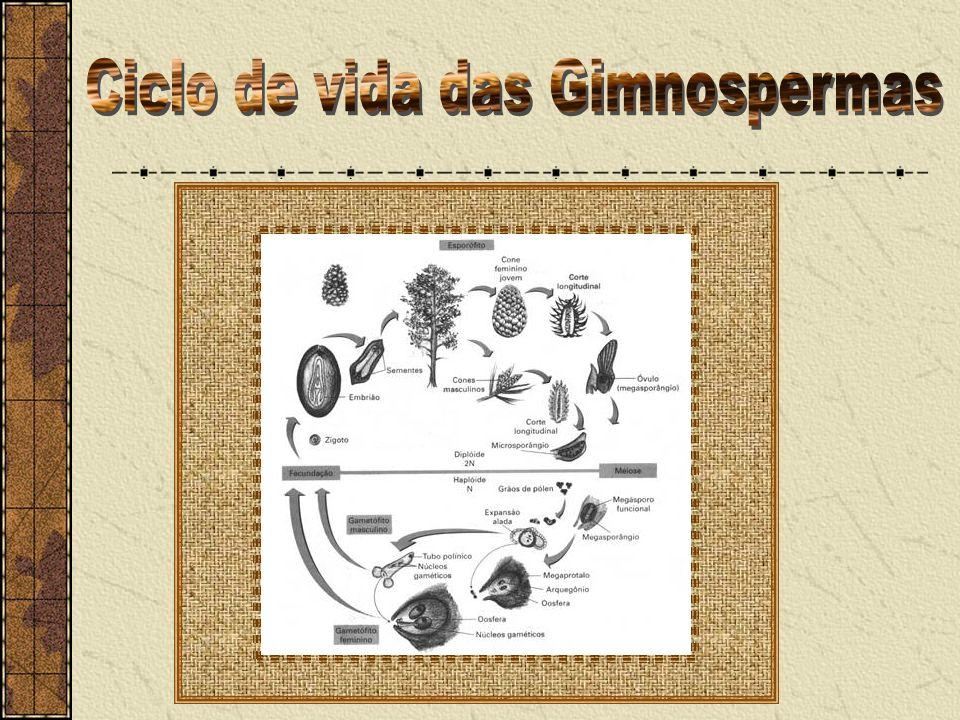 Ciclo de vida das Gimnospermas