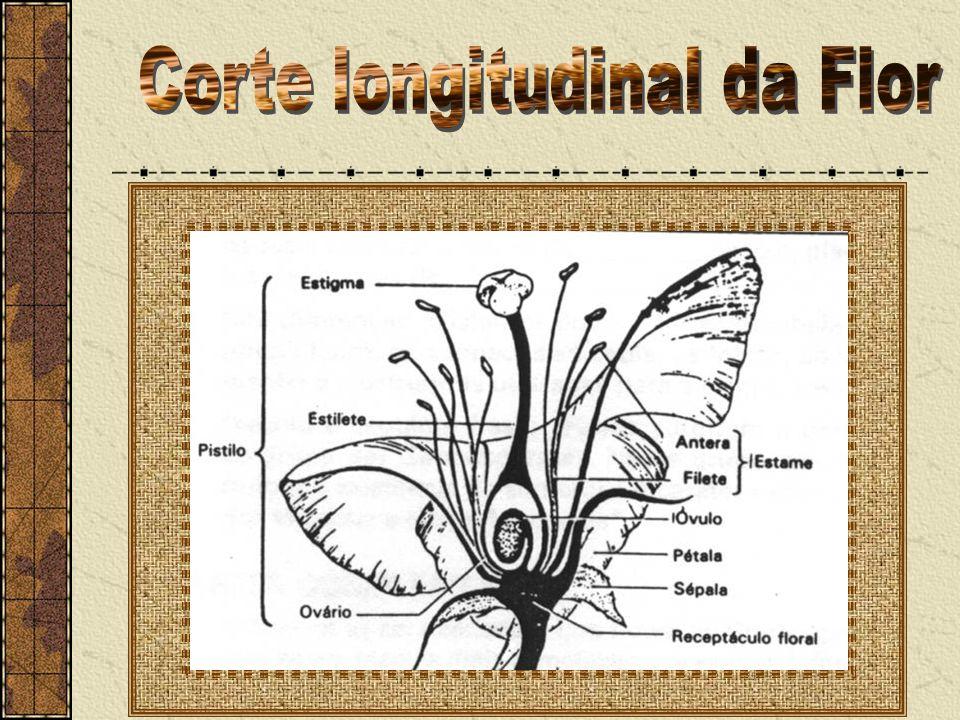 Corte longitudinal da Flor