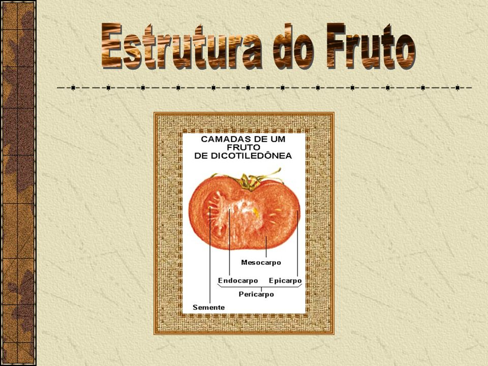 Estrutura do Fruto