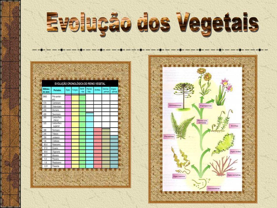 Evolução dos Vegetais