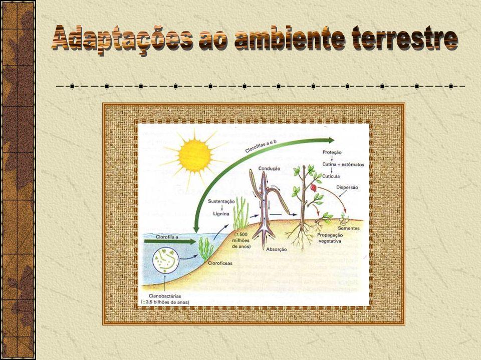 Adaptações ao ambiente terrestre