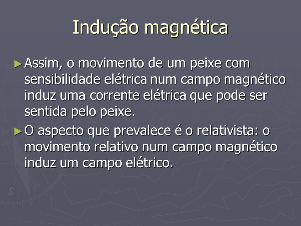 Indução magnética