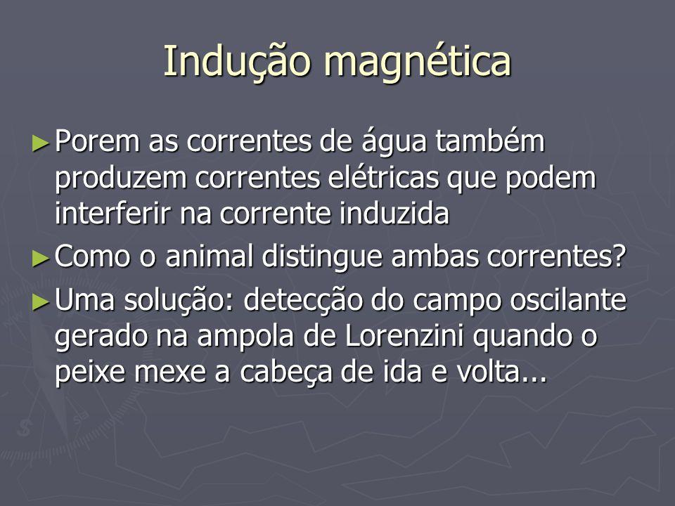 Indução magnéticaPorem as correntes de água também produzem correntes elétricas que podem interferir na corrente induzida.