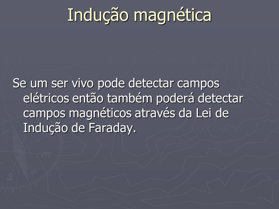 Indução magnéticaSe um ser vivo pode detectar campos elétricos então também poderá detectar campos magnéticos através da Lei de Indução de Faraday.