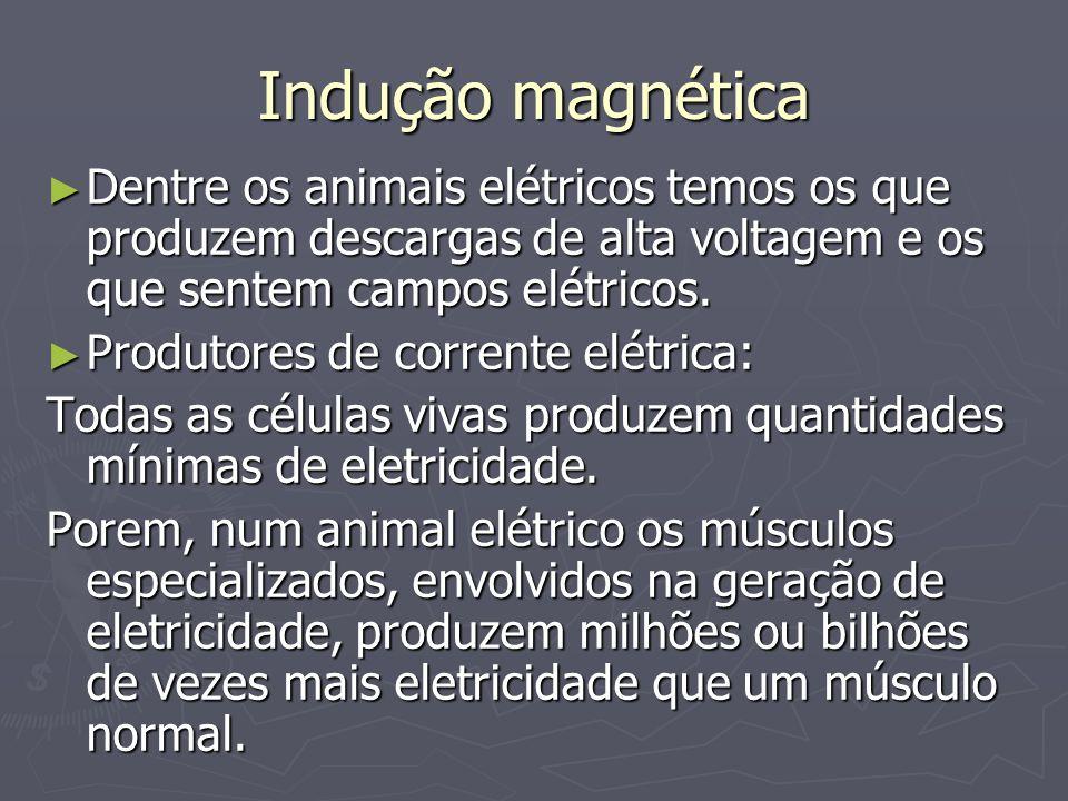 Indução magnéticaDentre os animais elétricos temos os que produzem descargas de alta voltagem e os que sentem campos elétricos.