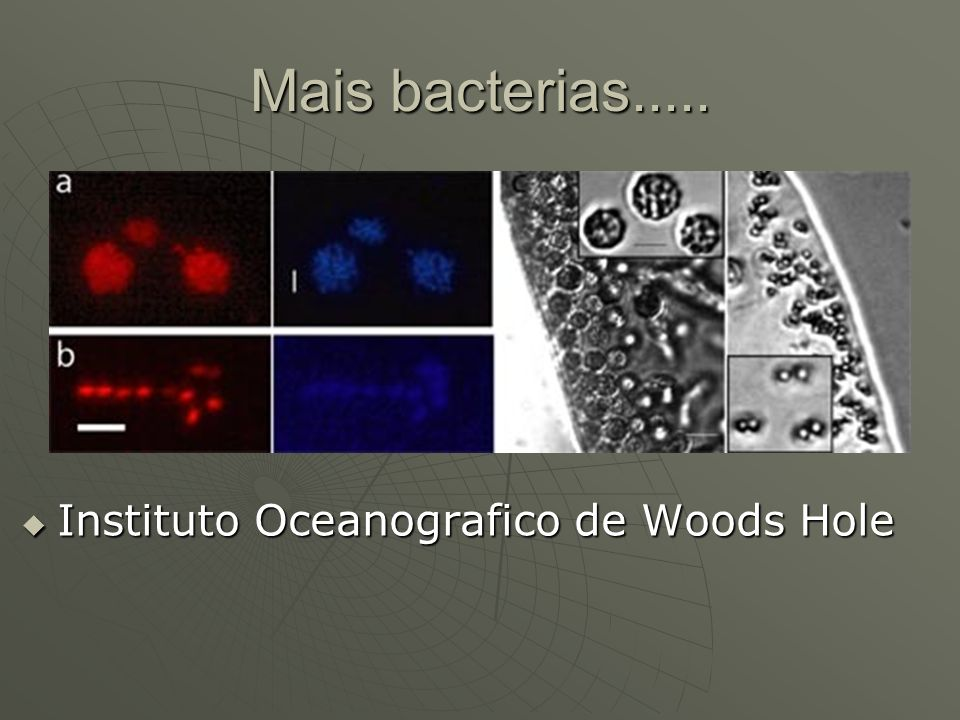 Mais bacterias..... Instituto Oceanografico de Woods Hole