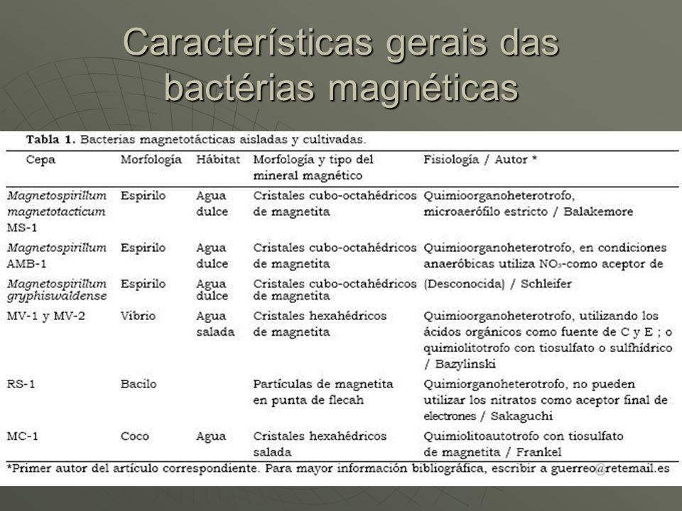 Características gerais das bactérias magnéticas