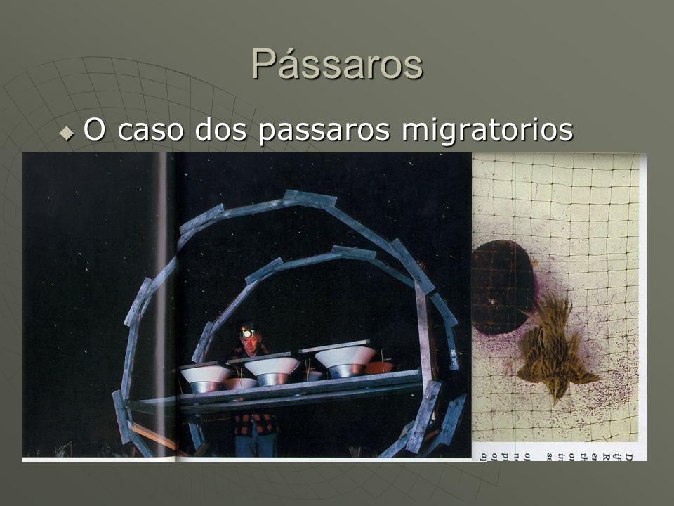 Pássaros O caso dos passaros migratorios