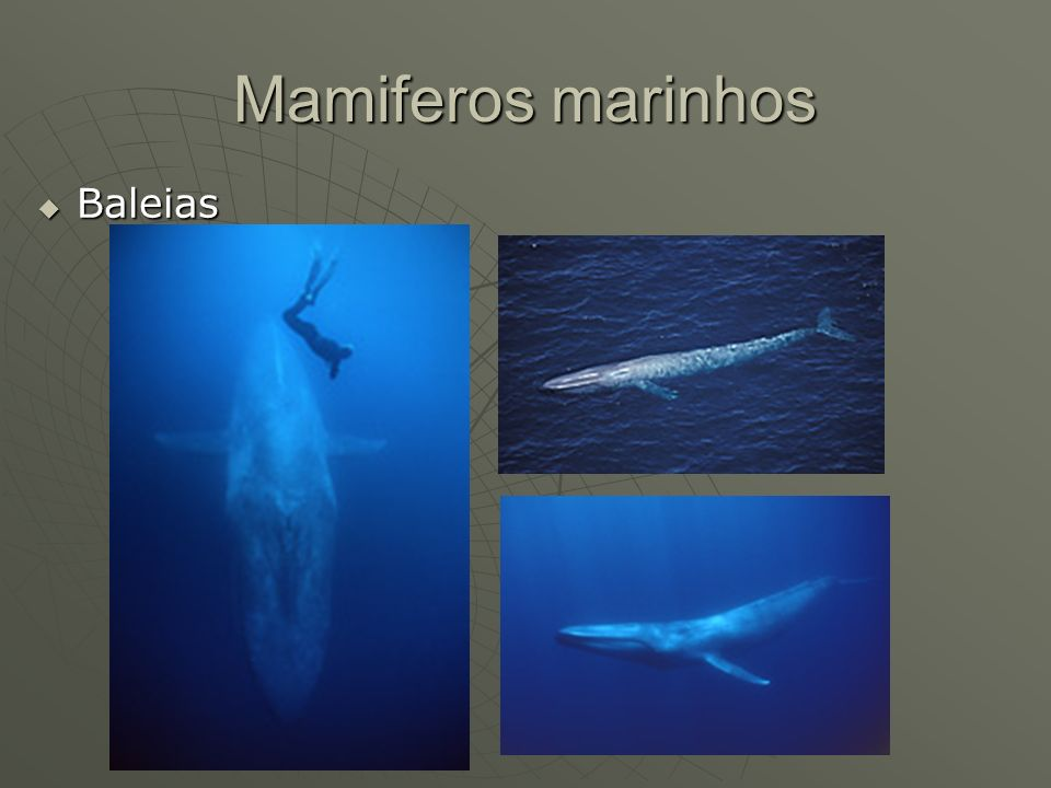 Mamiferos marinhos Baleias