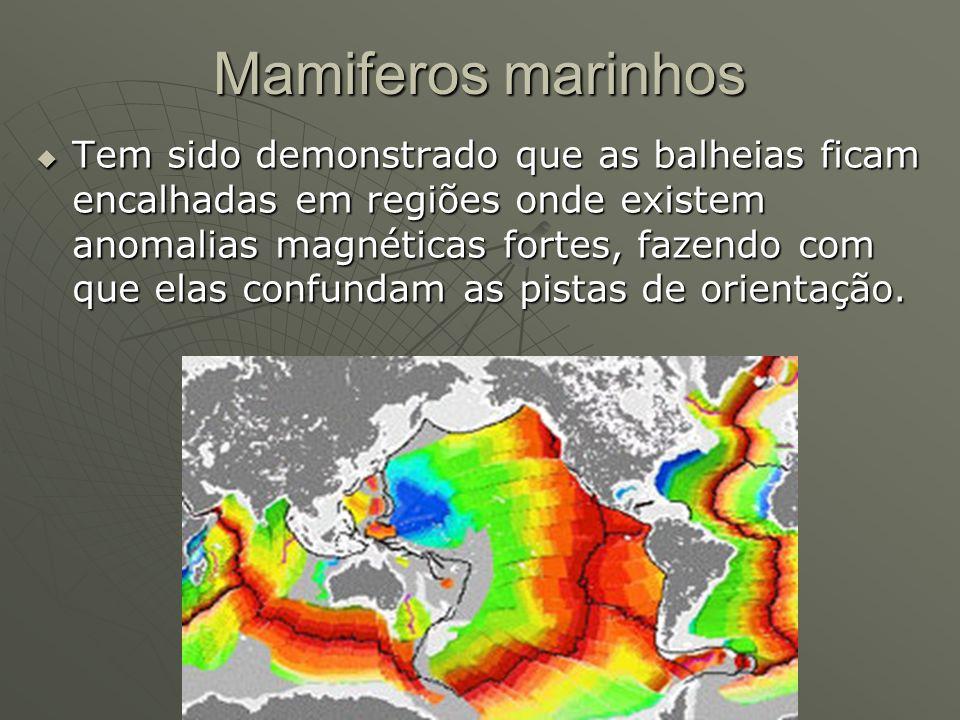 Mamiferos marinhos