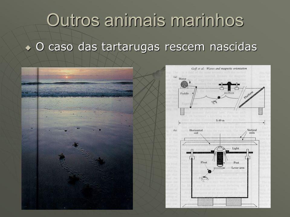 Outros animais marinhos