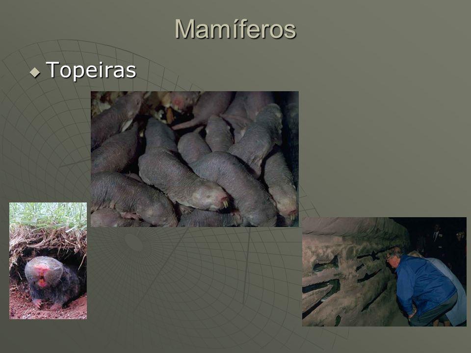 Mamíferos Topeiras