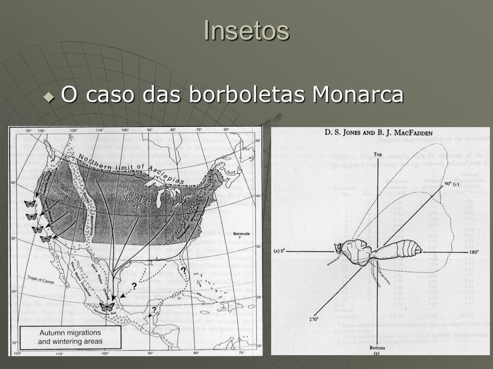 Insetos O caso das borboletas Monarca
