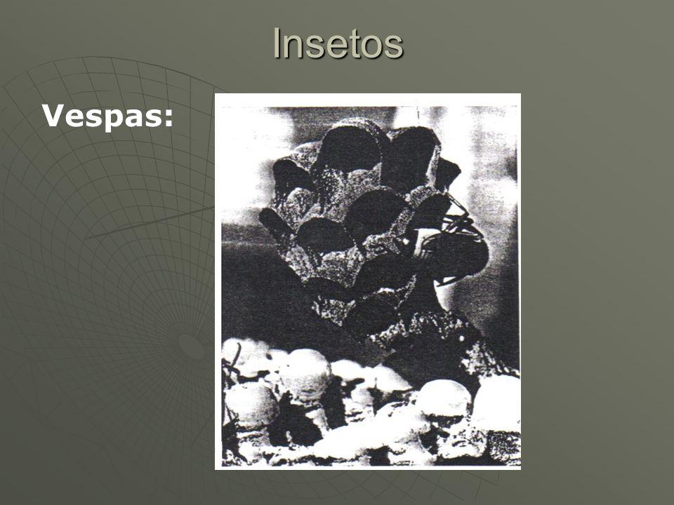 Insetos Vespas: