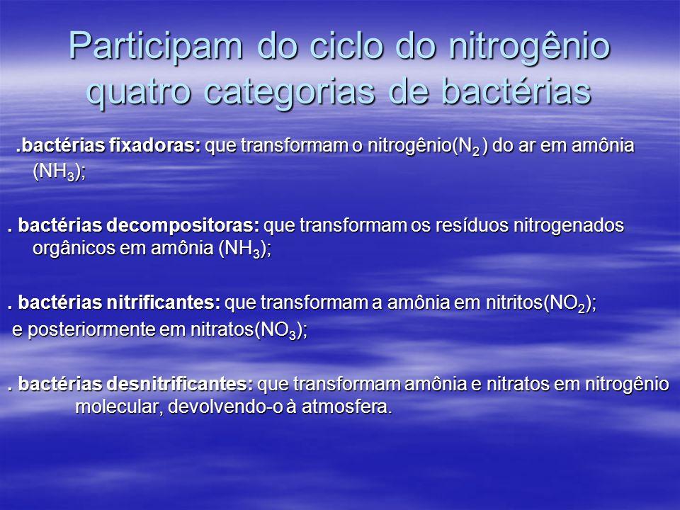 Participam do ciclo do nitrogênio quatro categorias de bactérias