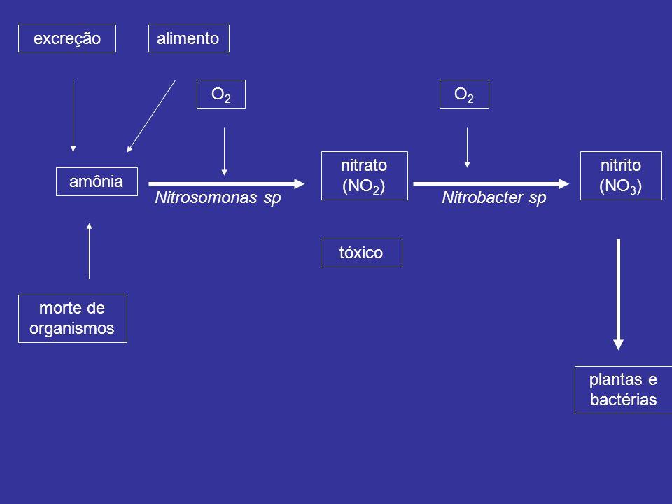amônia excreção. morte de organismos. O2. nitrato (NO2) alimento. Nitrosomonas sp. nitrito (NO3)