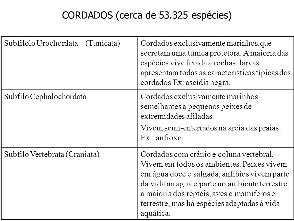 CORDADOS (cerca de 53.325 espécies)