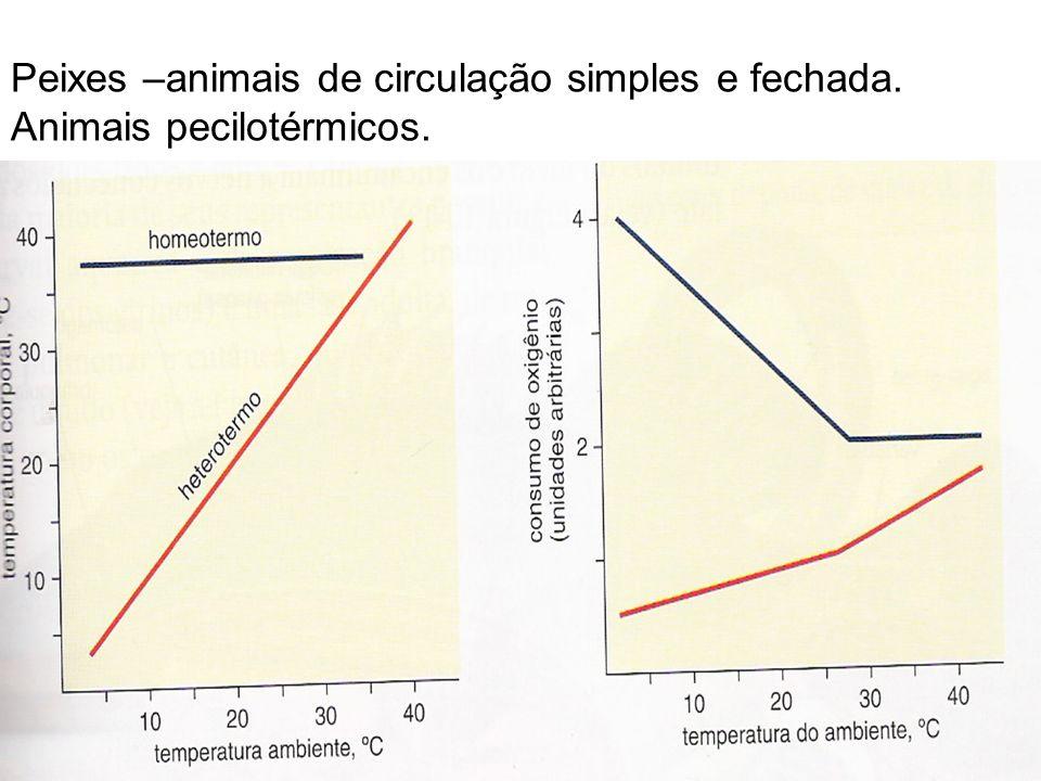 Peixes –animais de circulação simples e fechada. Animais pecilotérmicos.
