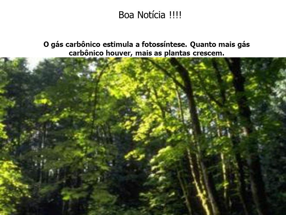 Boa Notícia !!!. O gás carbônico estimula a fotossíntese.
