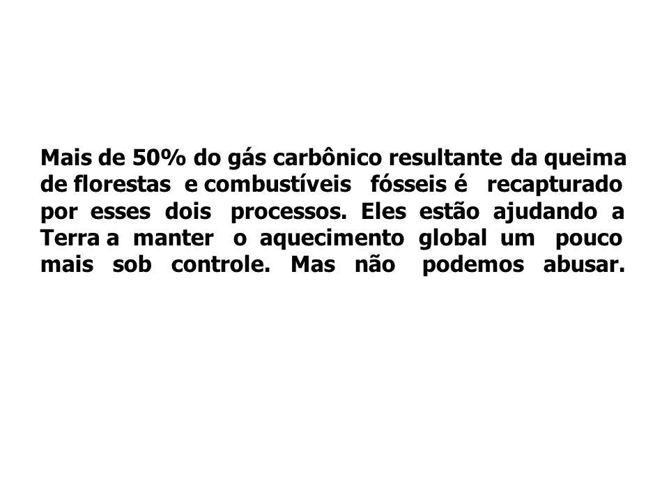 Mais de 50% do gás carbônico resultante da queima de florestas e combustíveis fósseis é recapturado por esses dois processos.