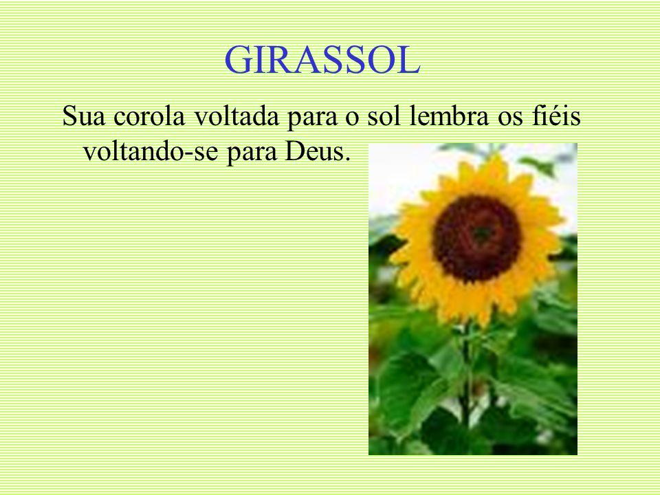GIRASSOL Sua corola voltada para o sol lembra os fiéis voltando-se para Deus.