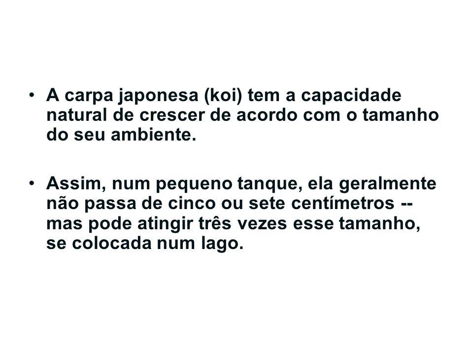 A carpa japonesa (koi) tem a capacidade natural de crescer de acordo com o tamanho do seu ambiente.