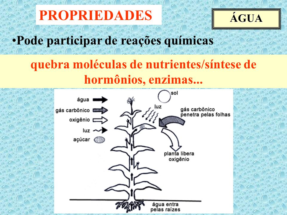 quebra moléculas de nutrientes/síntese de hormônios, enzimas...