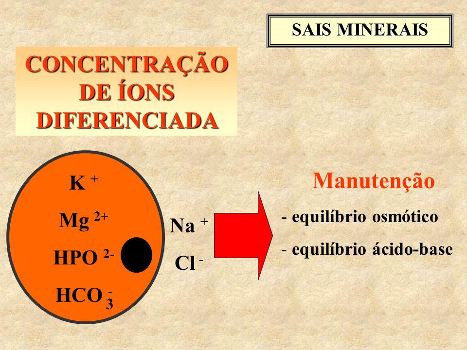 CONCENTRAÇÃO DE ÍONS DIFERENCIADA