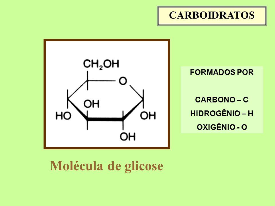 Molécula de glicose CARBOIDRATOS FORMADOS POR CARBONO – C