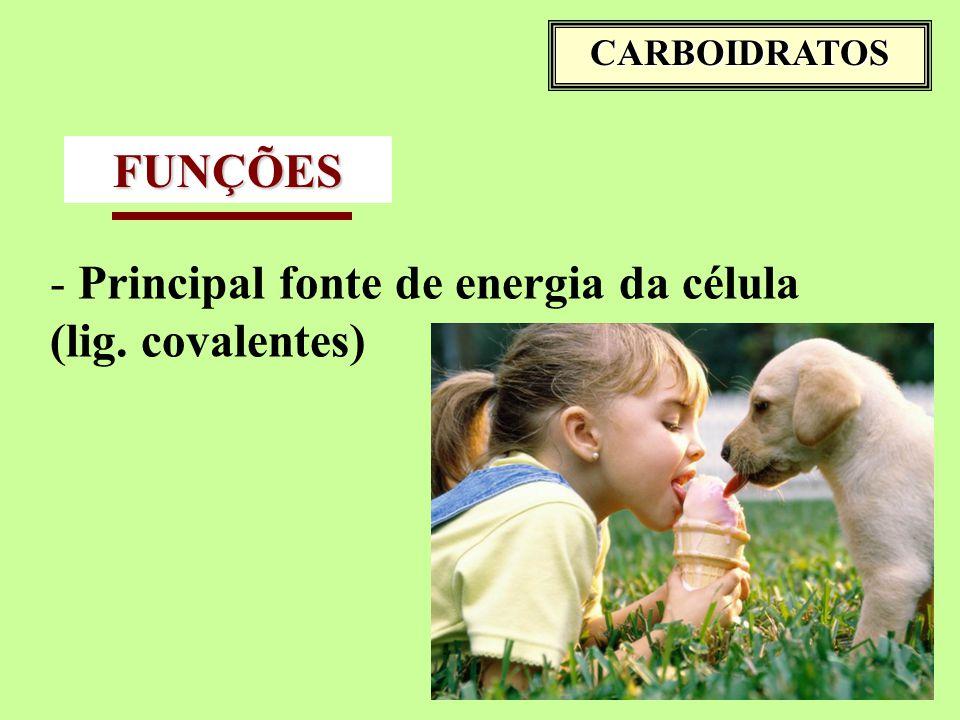 Principal fonte de energia da célula (lig. covalentes)