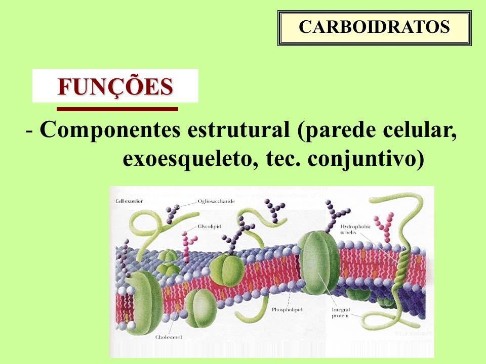 Componentes estrutural (parede celular, exoesqueleto, tec. conjuntivo)