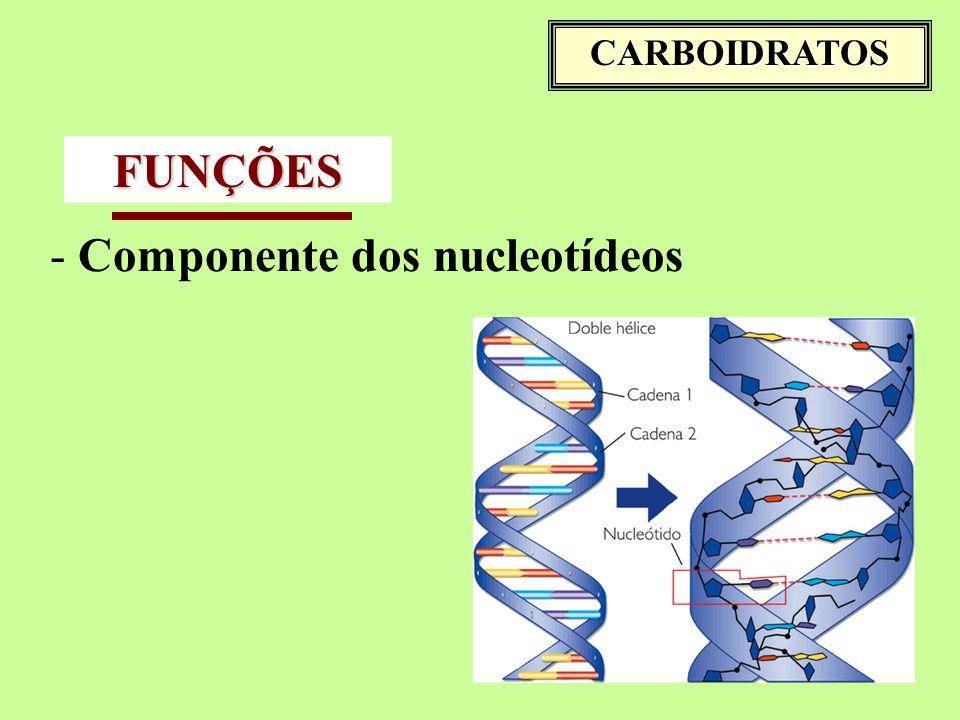 Componente dos nucleotídeos FUNÇÕES