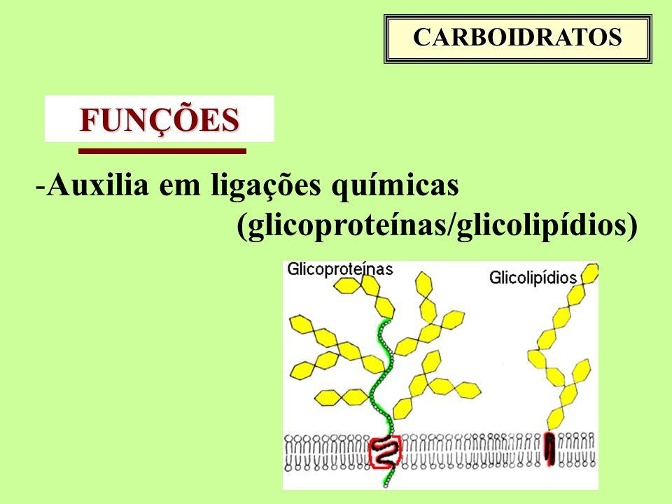 Auxilia em ligações químicas (glicoproteínas/glicolipídios) FUNÇÕES