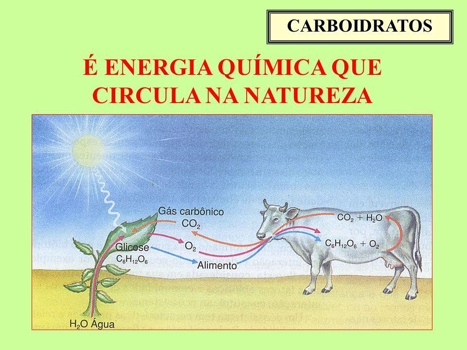 É ENERGIA QUÍMICA QUE CIRCULA NA NATUREZA