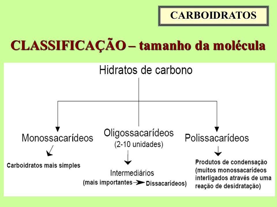 CLASSIFICAÇÃO – tamanho da molécula
