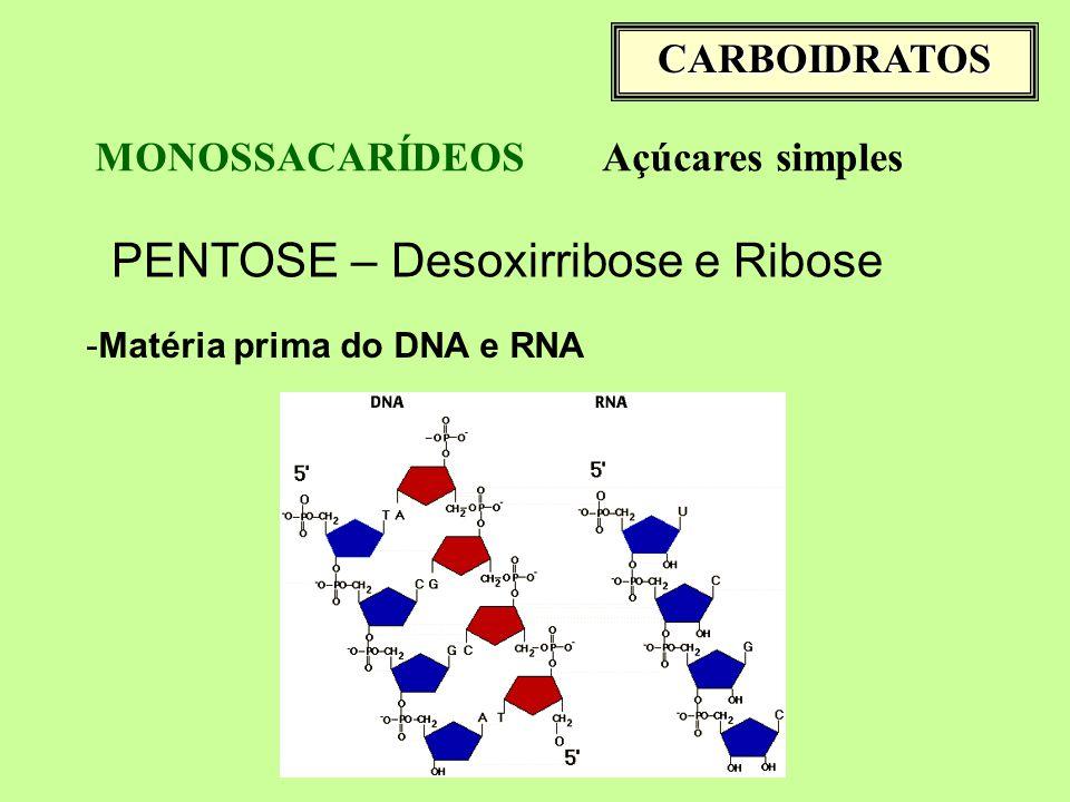 PENTOSE – Desoxirribose e Ribose