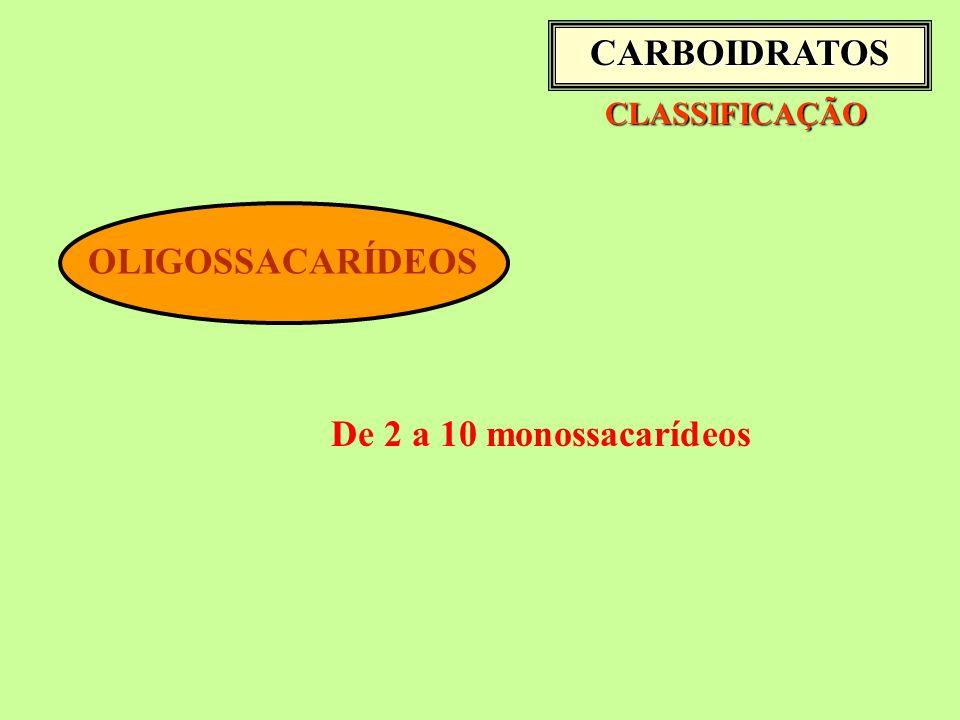 CARBOIDRATOS OLIGOSSACARÍDEOS De 2 a 10 monossacarídeos