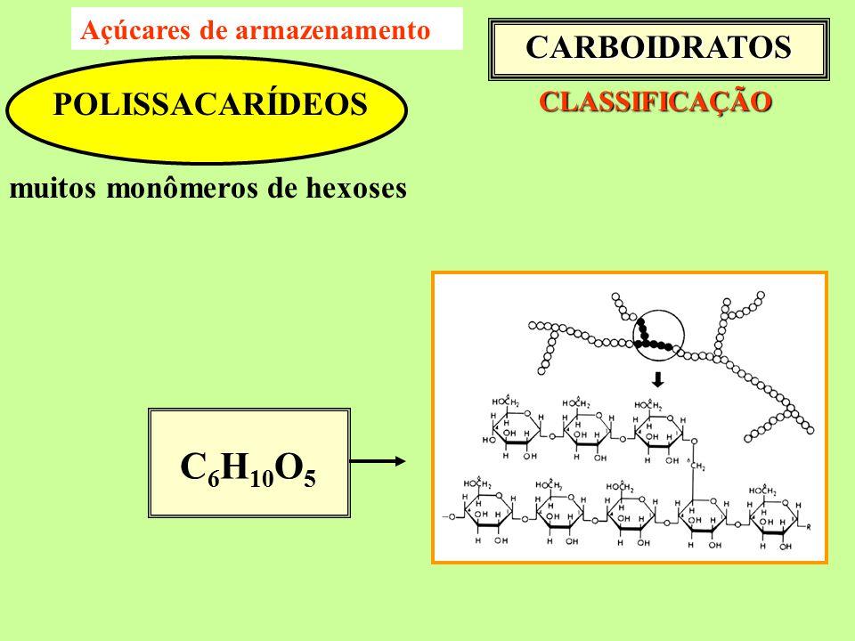 C6H10O5 CARBOIDRATOS POLISSACARÍDEOS muitos monômeros de hexoses